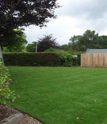 lawns and turf - dan morgan garden landscaping and maintenance